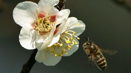 Robot bees: Walmart plots global pollination (IMAGE)