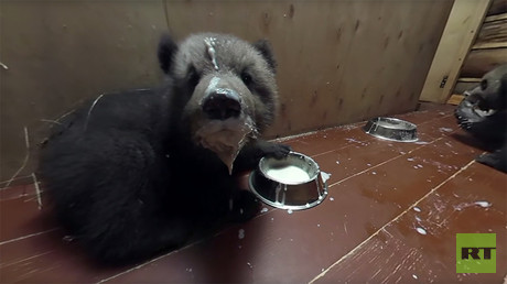 Mission: Bear cubs (PROMO)