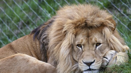 Zoo death threats: Swedish wildlife park exposed for destroying 163 healthy animals