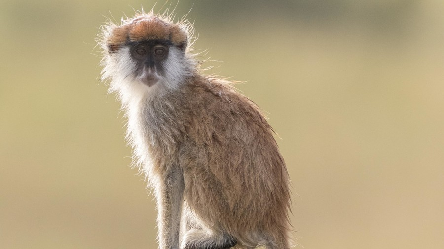 13 monkeys killed in 'devastating' safari park fire