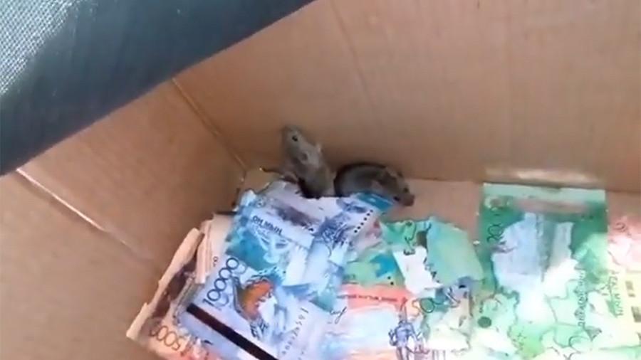 Mice chew through cash in Kazakh ATM (VIDEO)