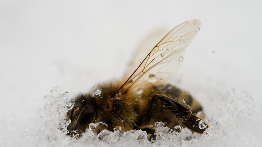 New bee species found thriving in former Arctic nuke site - study