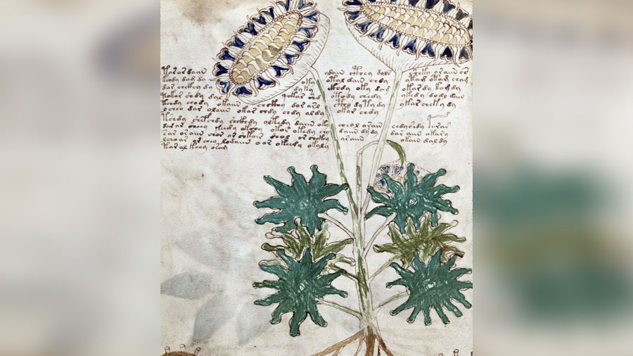 Has the mysterious Voynich manuscript finally been cracked?