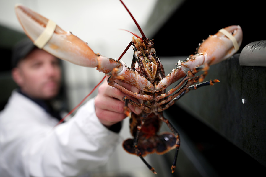 Shell shock! Swiss govt bans boiling lobsters alive under new animal protection rules