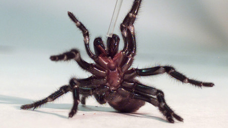 'Why don't you die?' Man on spider-slaying quest triggers police operation in Australia
