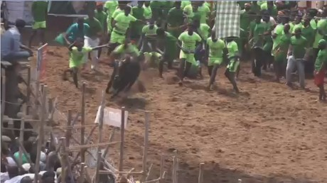 Jallikatu: Bull taming festival in Tamil Nadu, India