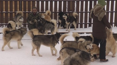 Lost & found: Abandoned huskies find home in Moscow region