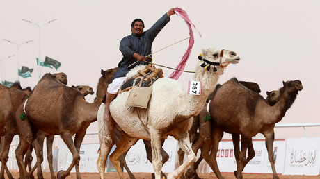 Uproar at Saudi Arabian camel beauty contest as contestants caught using Botox