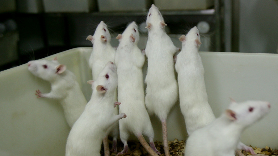 Two-part cancer treatment 'eliminates tumors in mice' –  study