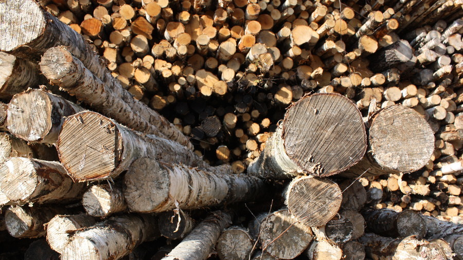 'Bulletproof wood' could revolutionize construction & defense industries (VIDEO)