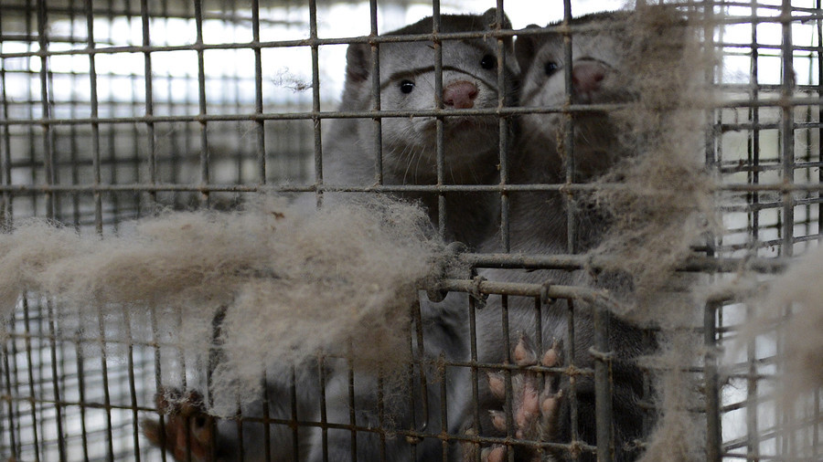 Met police cover up: Officer's secret role in mink farm operation exposed