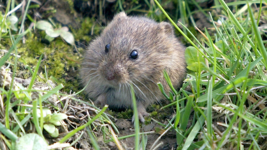 'Million Dollar' mouse hunt: NZ Navy & govt minister go after rodents in subantarctic