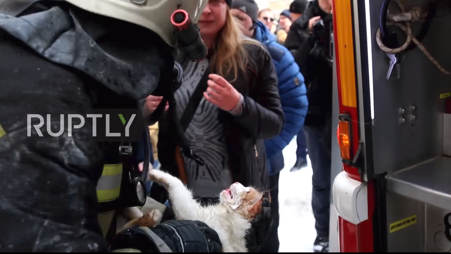 Heroic Russian firefighters revive 'lifeless' cat after tragic apartment blaze (VIDEO)