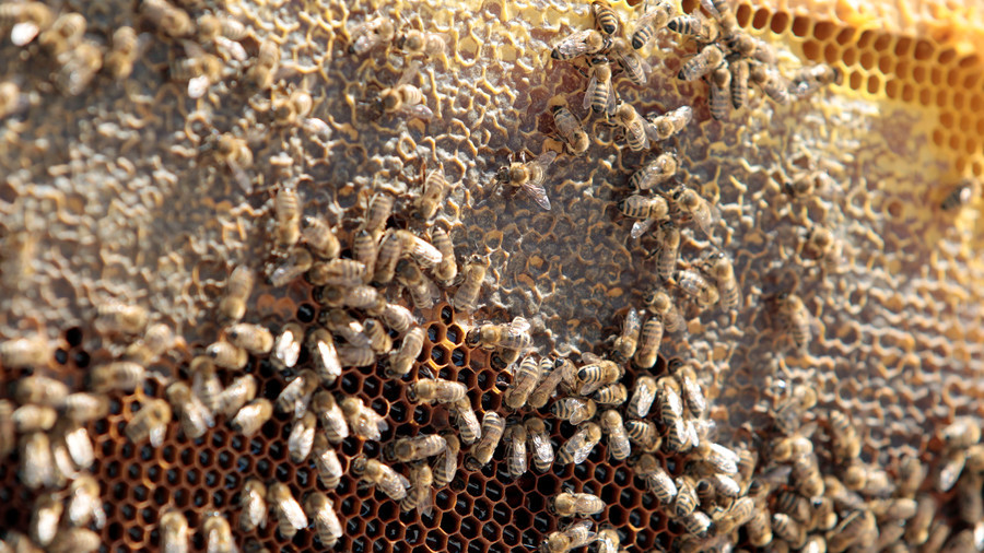 Hiveway robbery: Enormous 'angry' swarm may descend on UK after million-bee heist