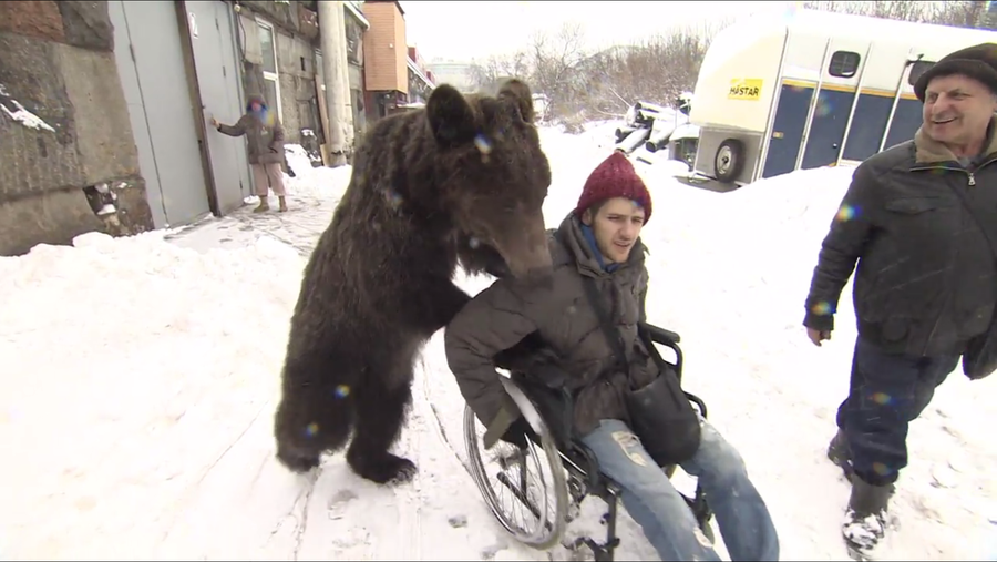 Unbearlievable! Shaggy-haired nurse pushes circus artist to recovery (VIDEO)