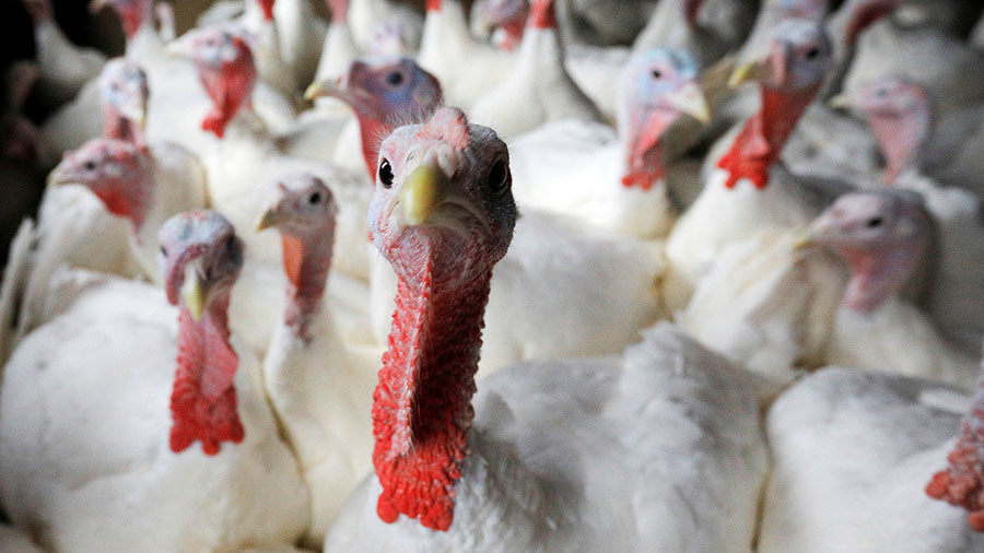 Clucking hell: Ministry of Defence pays £2mn in compensation for scaring animals