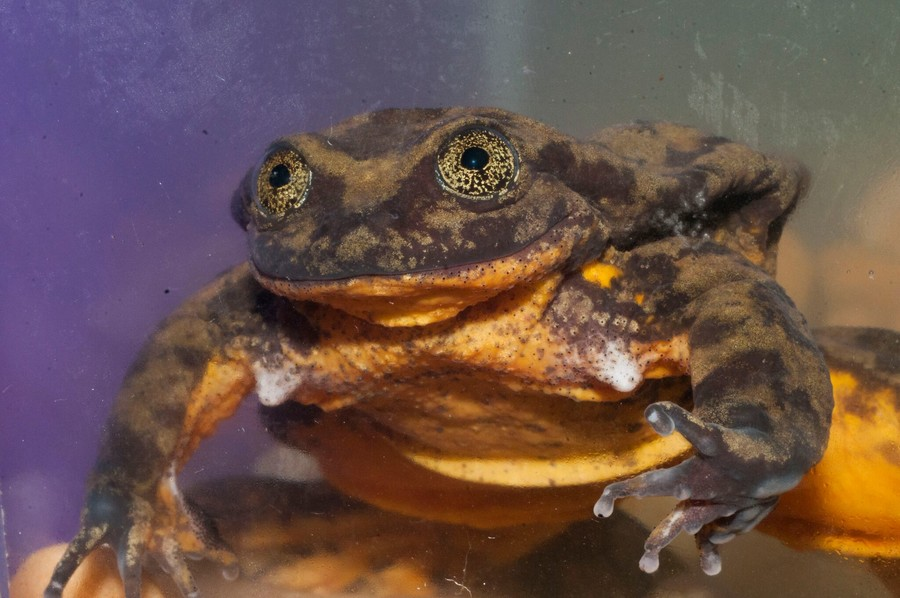 Lonely frogs club: Romeo looks for love (VIDEO)