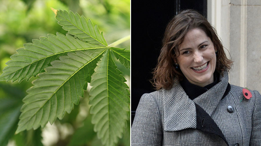Tory MP tasked with regulating drugs has husband that grows 45 acres of cannabis