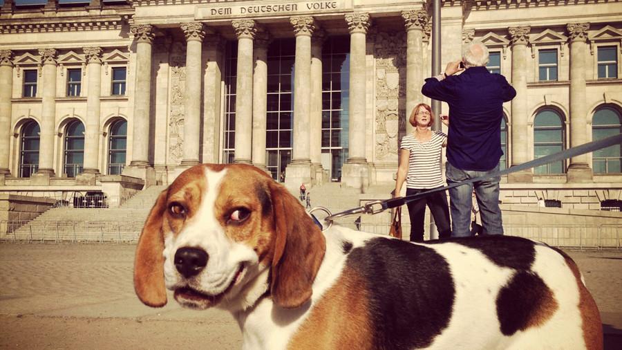 Hundestag? Germany's SPD red-faced after dog joins party