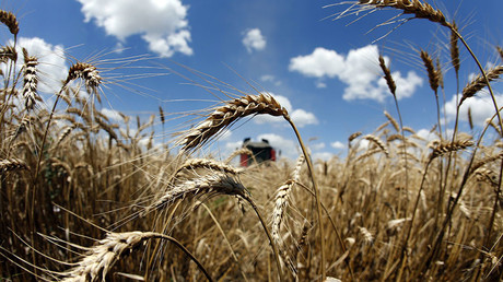 Russian farmers feeding half the world thanks to biggest grain harvest ever