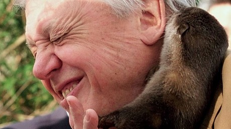 David Attenborough-themed raves go down a storm as Jungle Boogies sell out