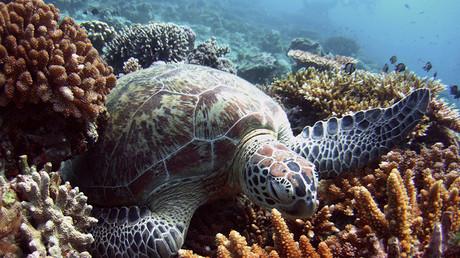 Coral reefs, ocean health & Richard Vevers