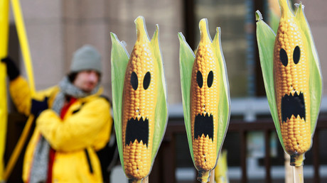 A Greenpeace activist displays signs symbolizing genetically modified maize crops during a protest in front of the European Union headquarters in Brussels © Thierry Roge