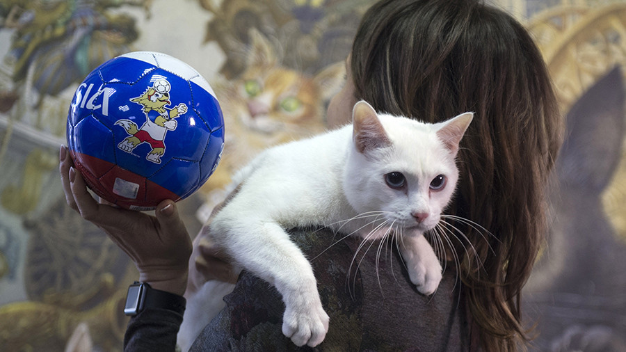 Achilles the deaf Hermitage cat to reprise role as 'animal psychic' for Russia 2018