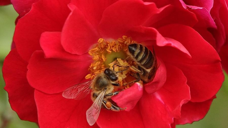 Robot bees: Walmart plots global pollination (IMAGE)
