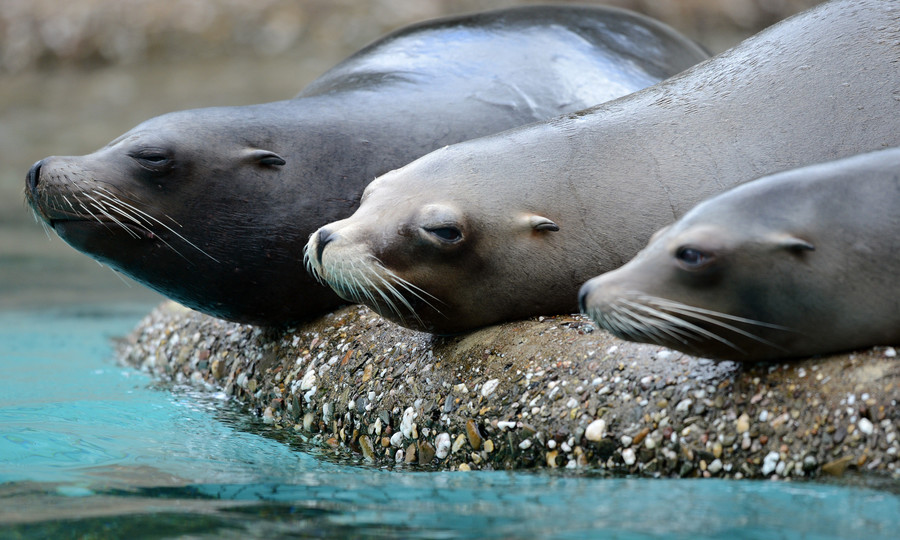 Sea lions at Cologne zoo spark formal probe over night-time antics