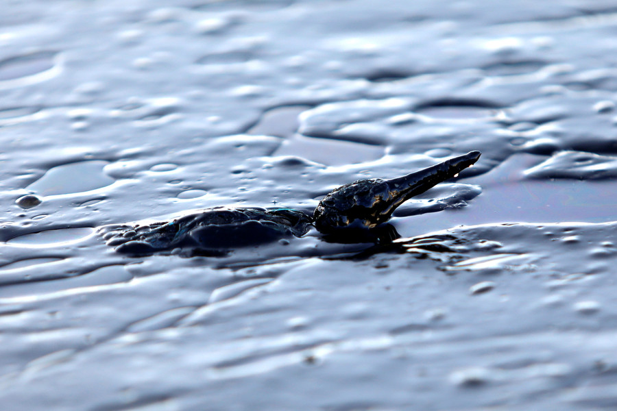 2,400 animals dead, 100s of residents evacuated after Colombia oil spill (VIDEOS, PHOTOS)