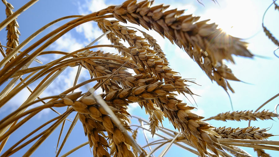 Russia expanding agricultural exports to lead global food market