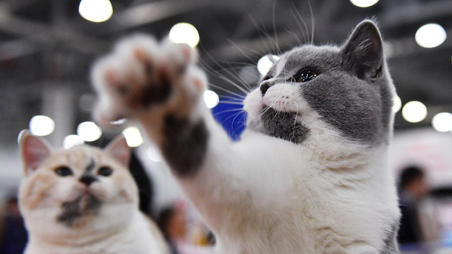 Russia going kitty crazy amid falling ruble