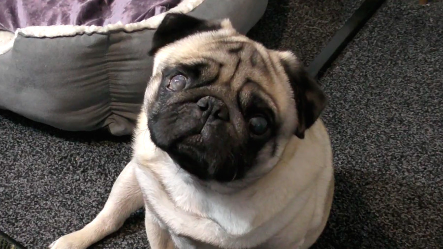 Vlogger crowdfunds £85K to appeal Nazi pug case, says he 'can't allow' anyone the same ordeal