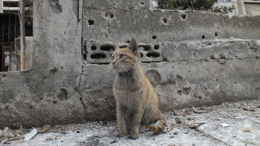 Cats of Syria: Kind souls in Syria create tubes to feed & water stray felines