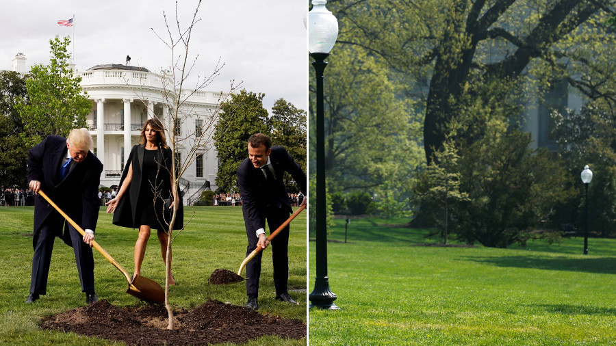 Dude, where's my tree? Twitter abuzz after oak planted by Trump & Macron 'vanishes'
