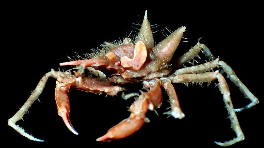 Here be monsters: Deep sea Java expedition uncovers bizarre new species (PHOTOS)