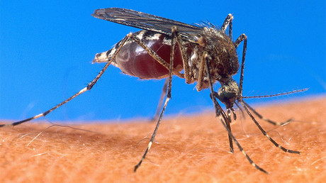 Commonwealth Games participant hospitalized with malaria