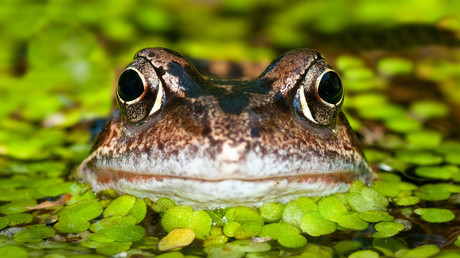 'Drain that pond': Mating frogs lock couple in most French legal dispute of all time