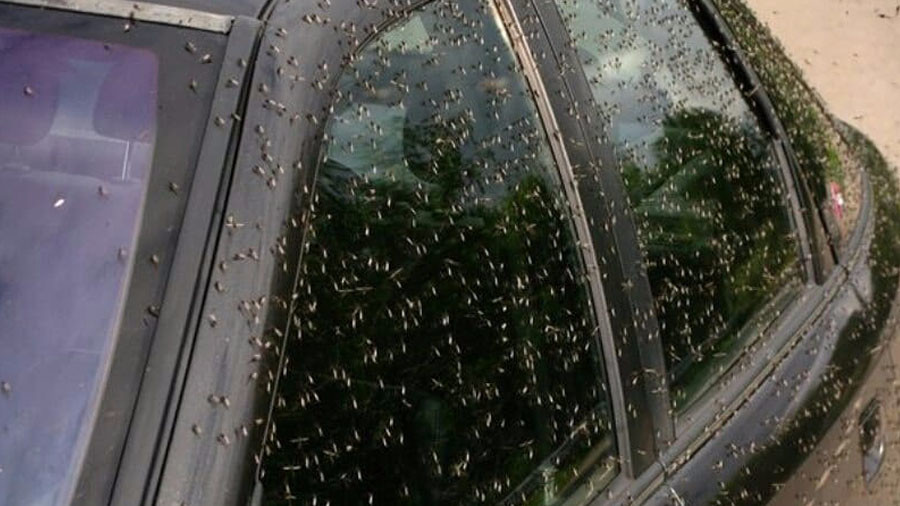 Swarms of mosquitoes blacken skies, terrorize people & animals in southwest Russia (PHOTOS, VIDEO)