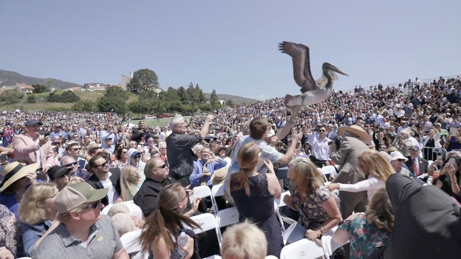 Pelican attack sparks graduation ceremony chaos (VIDEO)