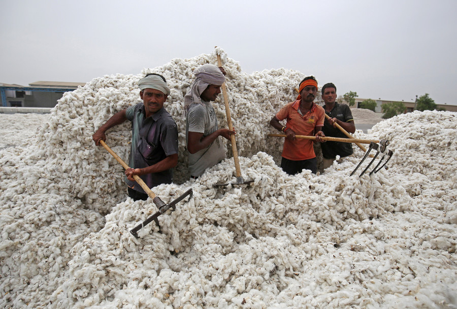 Monsanto challenges Indian court's decision that undermines its GMO cotton monopoly