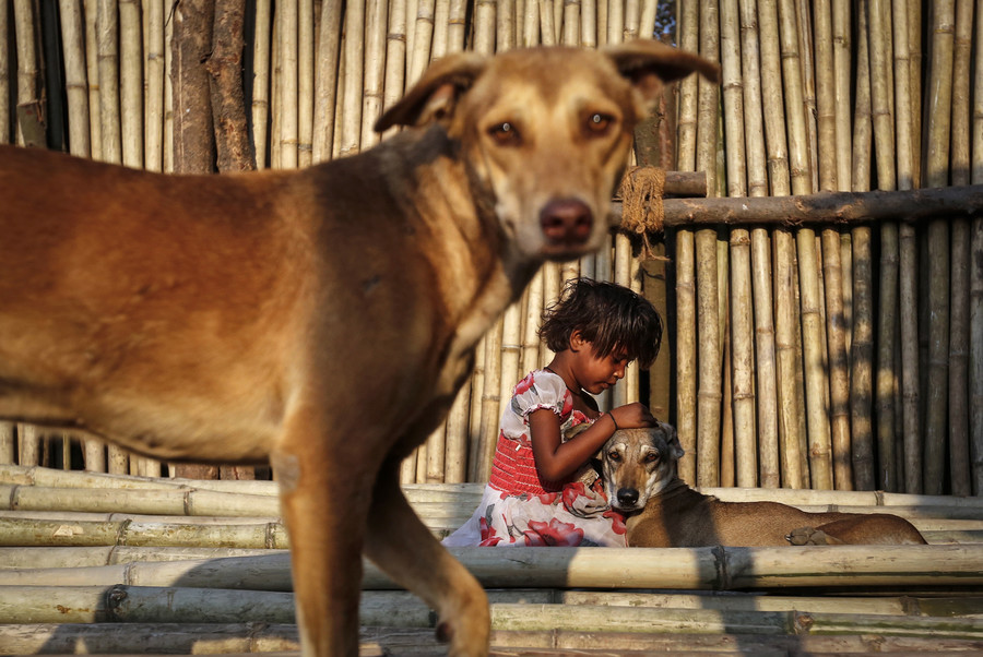 Packs of wild dogs maul 6 children to death in India