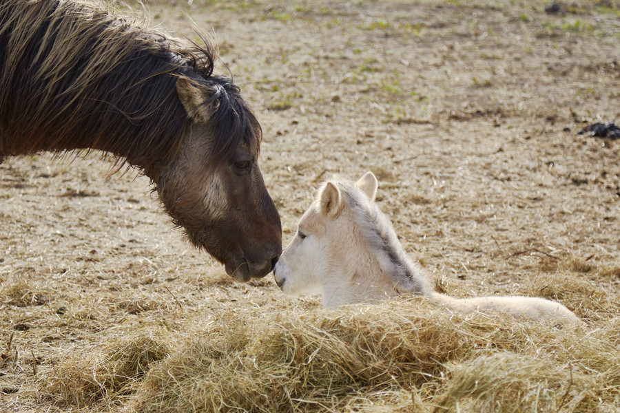 Nature's way? Thousands of starving horses & deer killed in Dutch 'wild reserve'