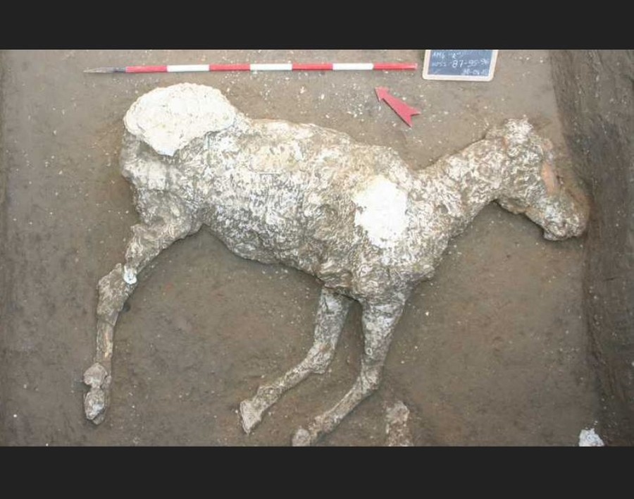 Pompeii horse discovered during investigation into grave robber tunnels (PHOTOS, VIDEO)