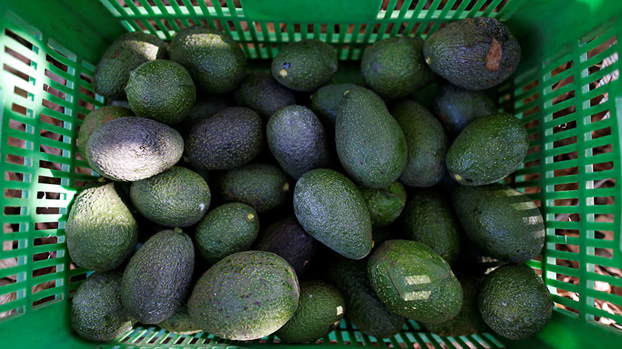 Chilean villagers suffer water shortages because of Europeans' love for avocado
