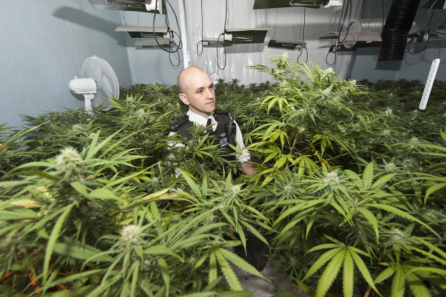 Cannabis for medical use could become law after MPs form legislation action group