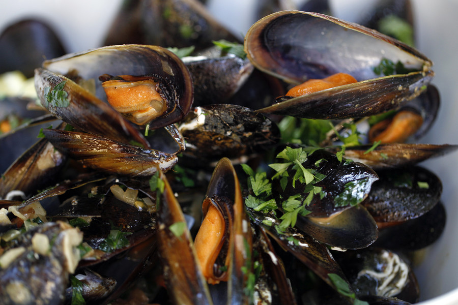 US opioid crisis: Mussels off Seattle found with oxycodone in their system