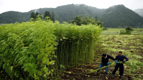 Thailand to green light marijuana cultivation for medical research in drug law U-turn
