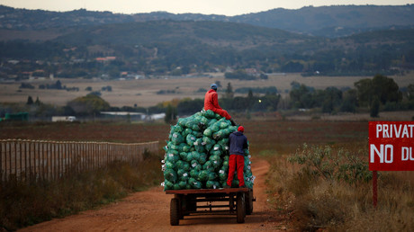 'A matter of life & death': 15,000 white South African farmers seek refuge in Russia, report says